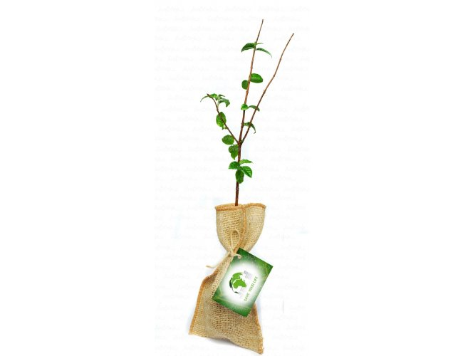 http://www.brindes.eco.br/content/interfaces/cms/userfiles/produtos/baby_tree_jt_mda_jtn46.jpg