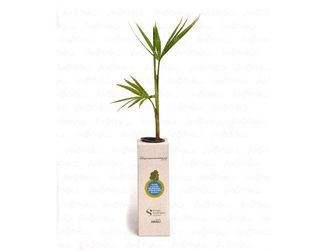 BABY TREE RECICLATO QUAD
